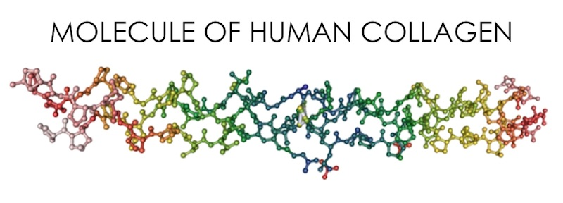 Collagen trong cơ thể người