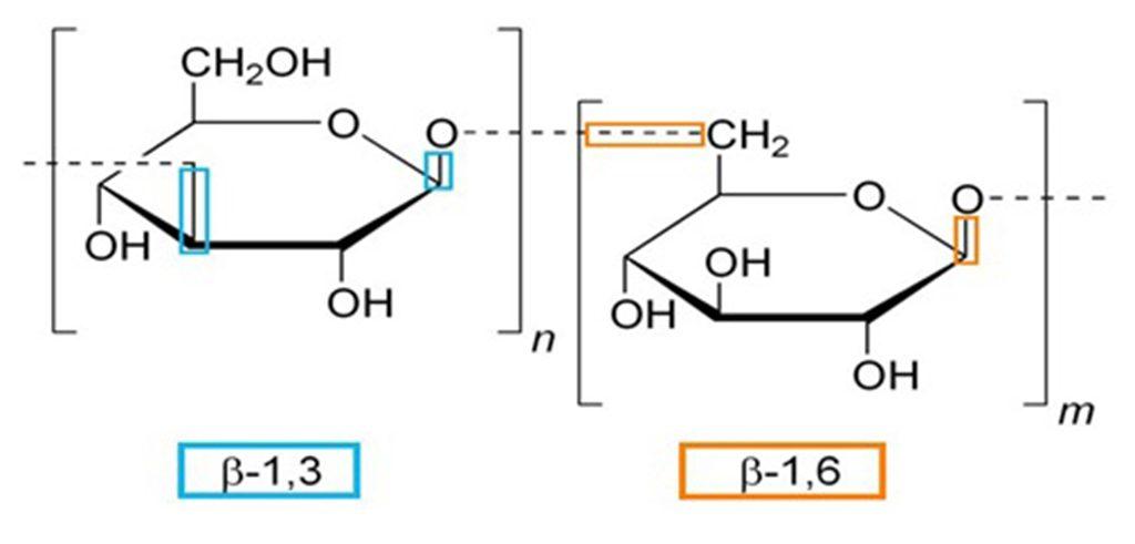 Beta-Glucan-1-3-1-6